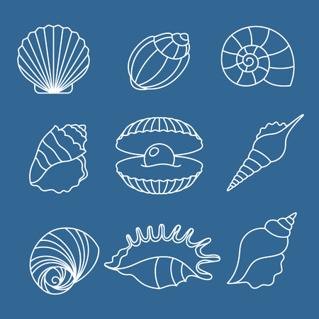 thin shell: Sea shell outline icons on blue background. Vector illustration