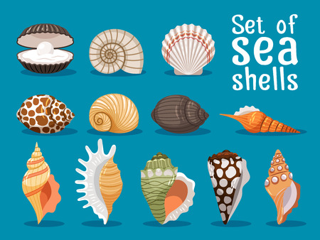 Sea shells isolated on blue background. Seashell set vector illustration for your sea design Illustration