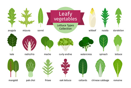 Green vegetables leaf set. Natural salad leaves and herbs isolated on white background. Vector illustration