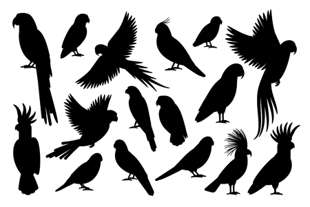 Vector parrot silhouettes of amazon jungle isolated on white background Illustration