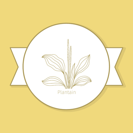 Plantain medicine plant, yellow label design in circle shape and flat shadow. Vector illustration