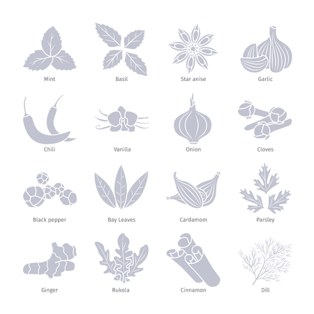 cilantro: Condiments and spices vector silhouettes set on white Illustration