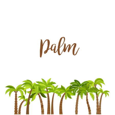 palmetto: Cartoon colored palm trees forest, isolated on white background. Vector illustration Illustration