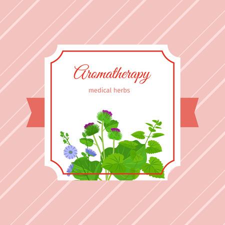 bilberry: Aromatherapy medical herbs label design. Chicory, burdock, eucalypt herbs. Vector illustration Illustration