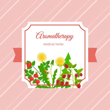 calendula: Aromatherapy medical herbs label design. Dandelion, raspberry, rose hip herbs. Vector illustration Illustration