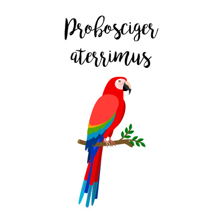 Exotic tropical bird isolated on white background. Probosciger aterrimus bird vector element with hand drawn inscription