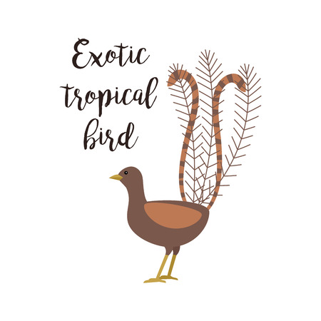 Exotic tropical brown bird isolated on white background. Art bird vector element with hand drawn inscription