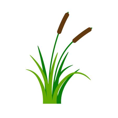 Bush bulrush with green grass isolated on white background. Vector illustration
