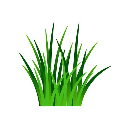 Hierba verde oscuro aislada sobre fondo blanco, ilustración vectorial