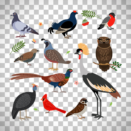 Vector bird icons. Owl and pheasant, bullfinch and crane isolated on transparent background Illustration