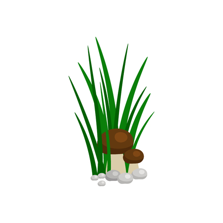 Bush of green grass with mushroom isolated on white background. Vector illustration