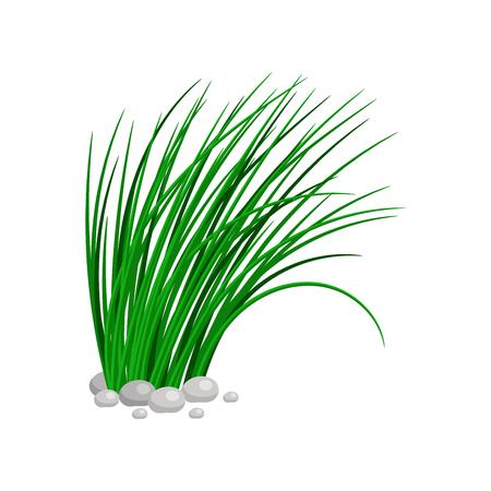 白い背景に分離された背の高い緑の草の茂み。ベクトル図  イラスト・ベクター素材
