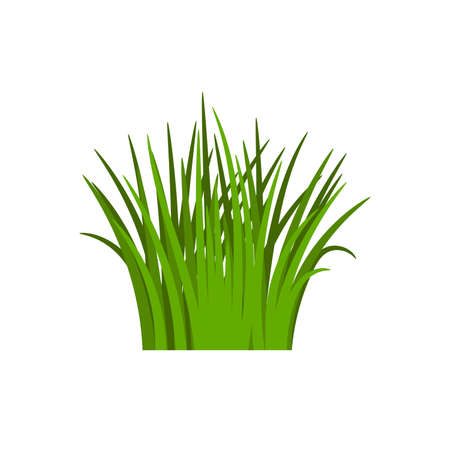 Light green grass isolated on white background, vector illustration