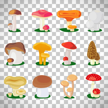 Edible mushrooms and toadstools illustration set isolated on transparent background
