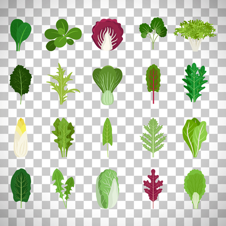 Green salad leaves set isolated on transparent background