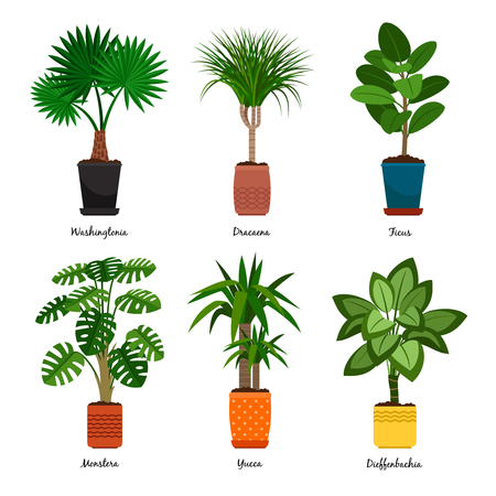 Decorative houseplants in pots vector illustration. Florist indoor palm trees and interior flowerpots like washingtonia and dracaena, monstera and yucca