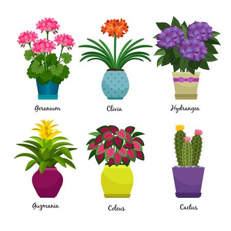 실내 정원 식물과 고립 된 신선한 꽃