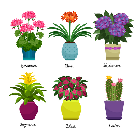 Indoor garden plants and fresh flowers isolated