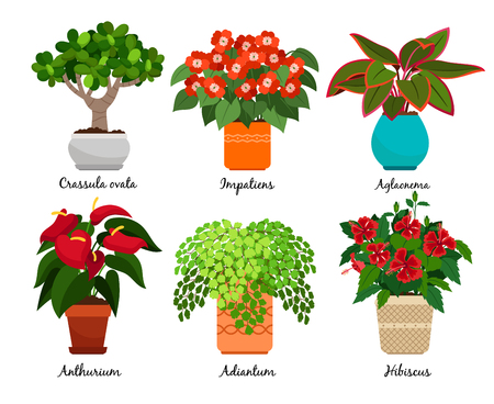 House flowers and vector indoor flowerpots isolated Illustration