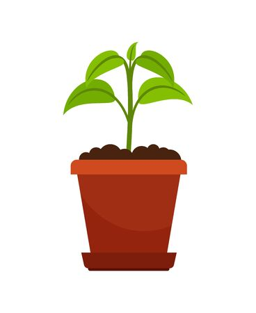 Houseplant in flower pot vector illustration