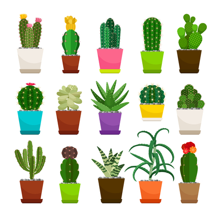 Set of cactus houseplants in flower pots. Vector icons on white background Illustration