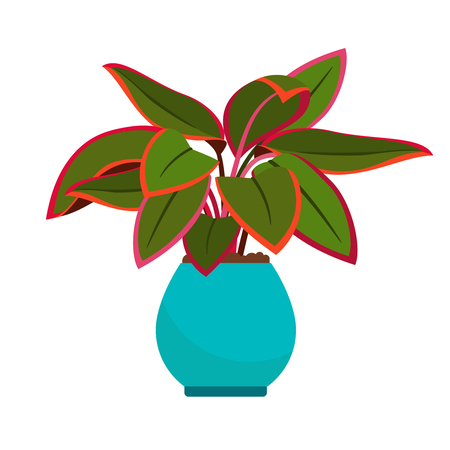 Aglaonema house plant in blue flower pot, vector icon on white background Illustration