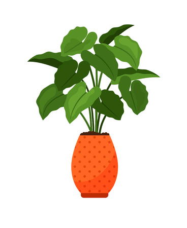 Alocasia house plant in flower pot vector icon on white background