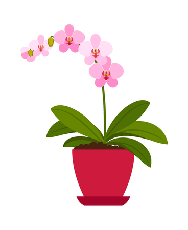 Orchid pink house plant in flower pot, vector icon on white background