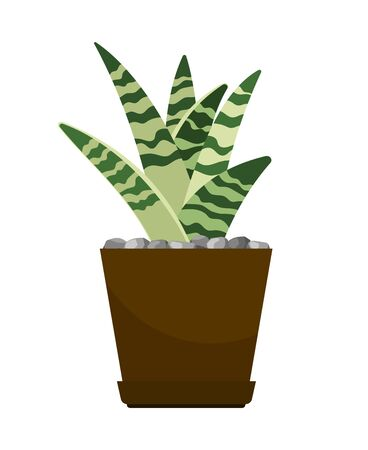 Cactus house plant in flower pot, vector icon on white background Stock Photo