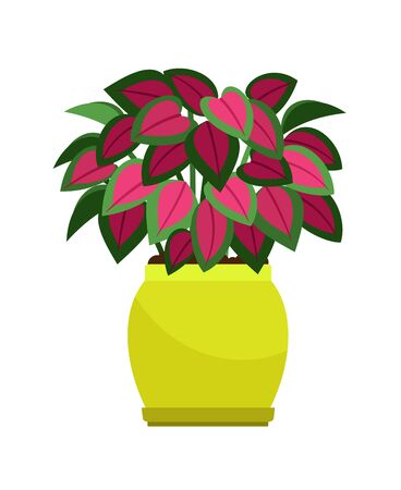 Coleus house plant in flower pot, vector icon on white background