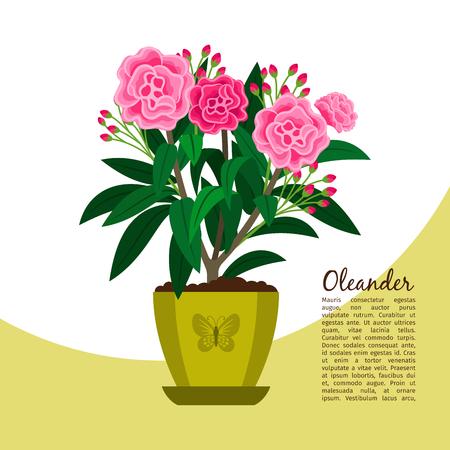 Oleander plant in pot banner