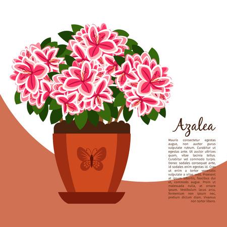 Azalea indoor plant in pot banner Illustration
