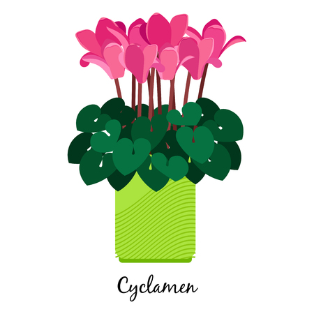 Cyclamen plant in pot icon Illustration