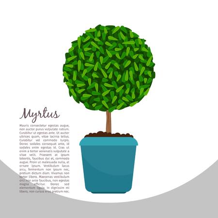Myrtus plant in pot banner Illustration