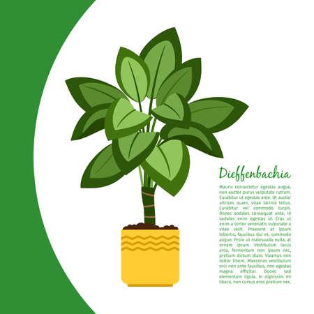 Dieffenbachia plant in pot banner