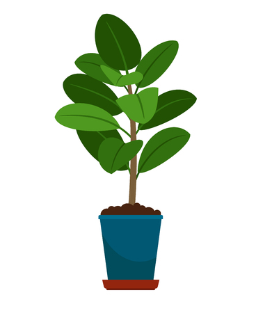 Ficus house plant in flower pot Vectores