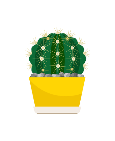 Cactus house plant in yellow pot