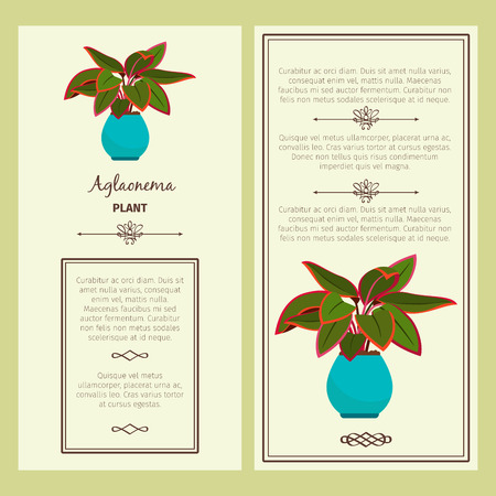 Greeting card with aglaonema plant.