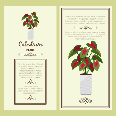 Greeting card with caladium plant.