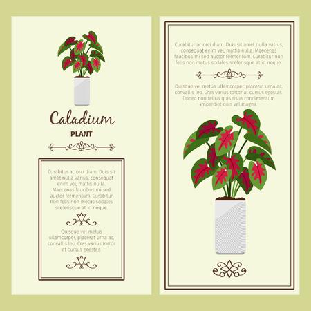 Greeting card with caladium plant.