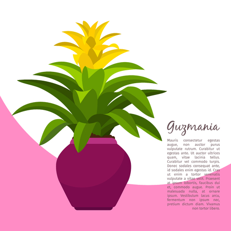 Guzmania indoor plant in pot banner template, illustration.