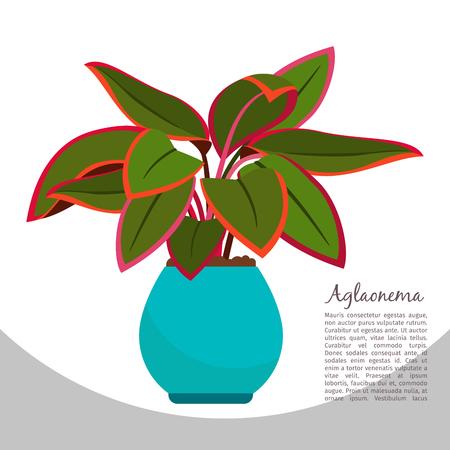 Aglaonema indoor plant in pot banner template, vector illustration