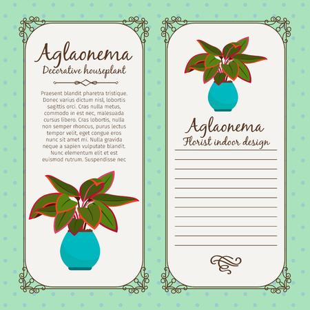 Vintage label template with decorative aglaonema plant in pot illustration. Illustration