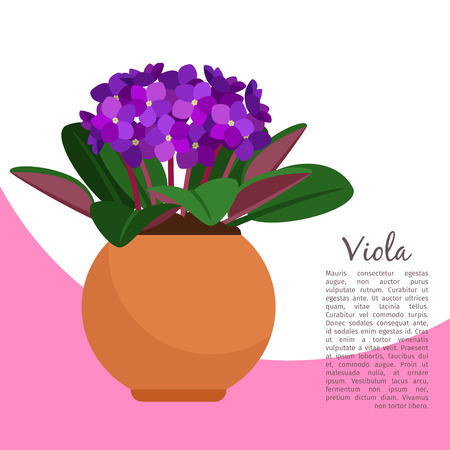 Viola plant in pot banner template