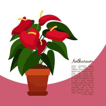 Anthurium plant in pot banner Illustration