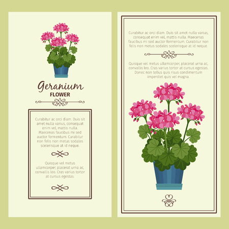 Geranium flower in pot banners
