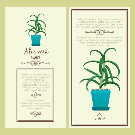 Greeting card with aloe vera plant