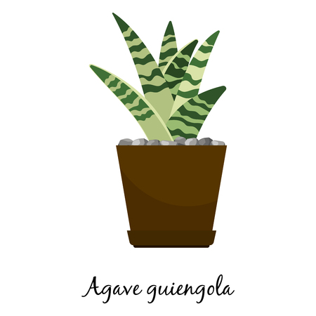Agave guiengola cactus in pot Stock Vector - 93688346