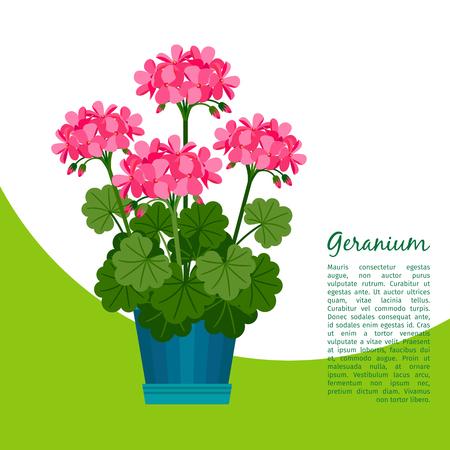 Geranium plant in pot banner