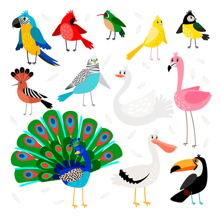 Birds tropical and exotic. Drawing wild bird set vector illustration, parrot and toucan with big beak, peacock and flamingo, hoopoe and swan